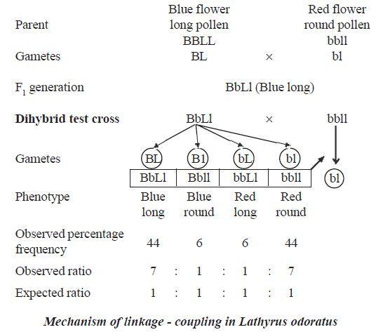 Dihybrid Cross Linked Genes