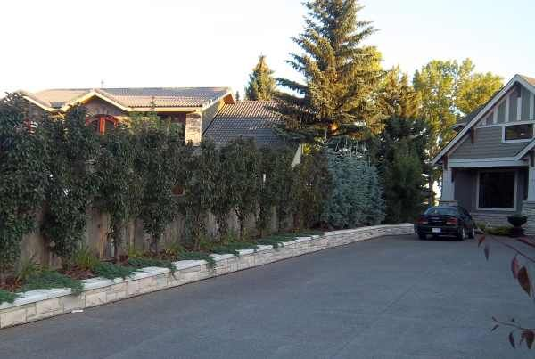 Effective Driveway Landscaping Ideas For A Narrow Strip