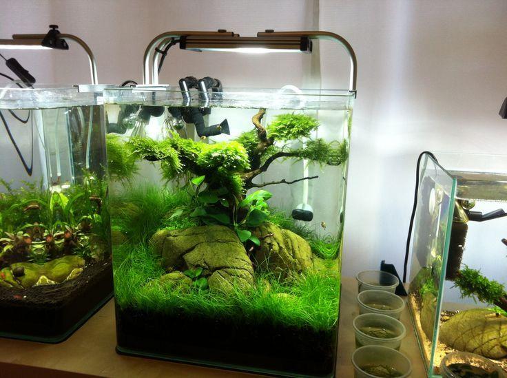 184 Best Images About Aquaria On Pinterest Plants