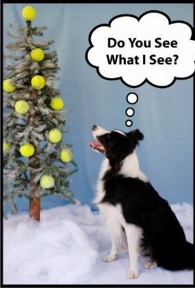 25 Best Ideas About Border Collie Humor On Pinterest