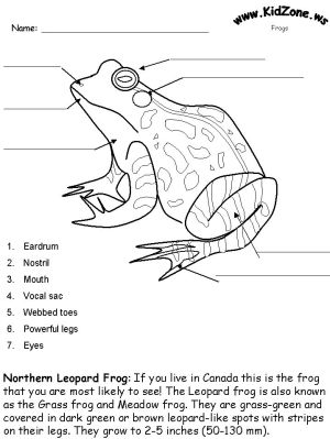 Frog Activity Sheet  Labeling a Northern Leopard Frog