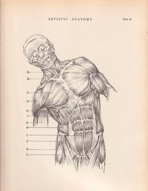 1000 images about Skeletal Muscles on Pinterest | Human