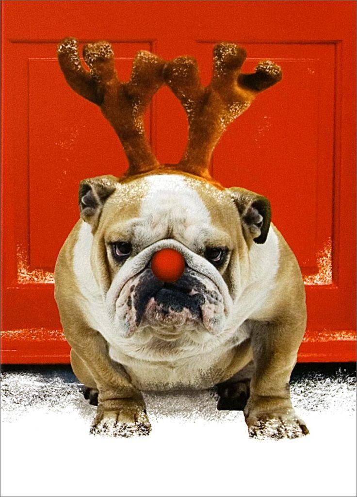 Christmas Bulldog Home Gt Christmas Cards Gt Animals