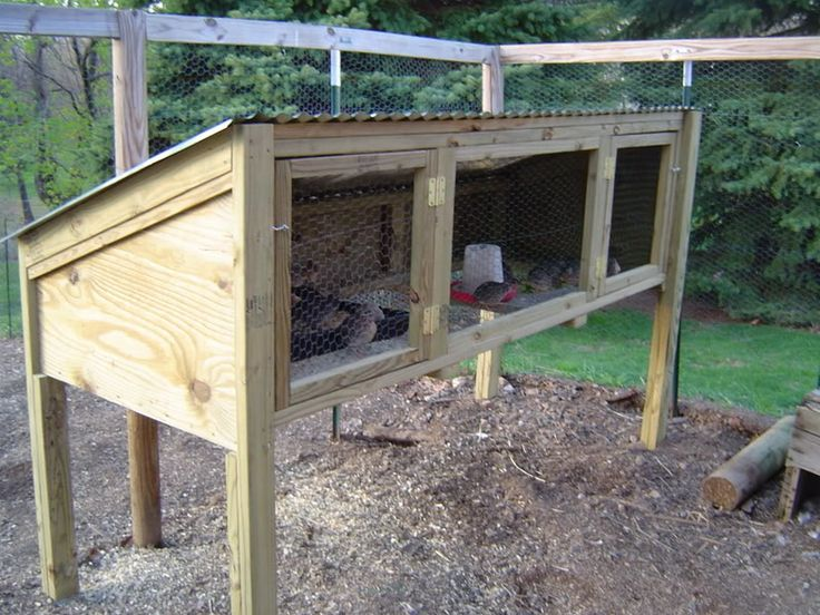 Bobwhite Quail Cage Plans