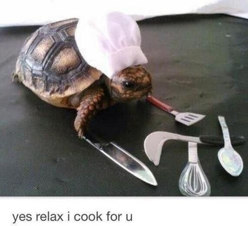 Tiny Turtle Chef. In case youre having a bad day. @Ashleigh {bee in our bonnet}