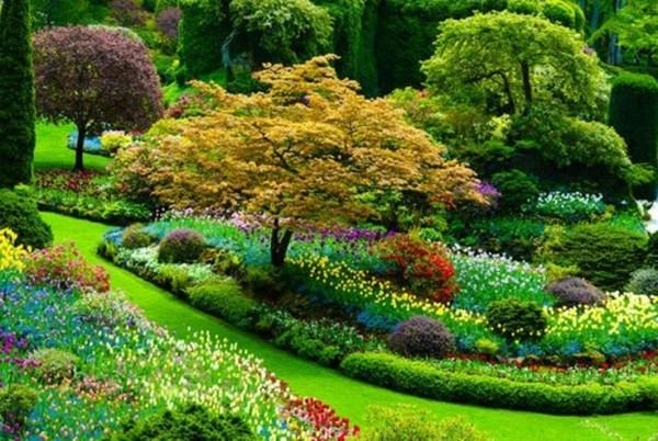 beautiful flower gardens pinterest beautiful flower garden in the Holland | Photos of