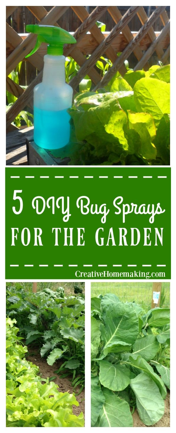 17 Best ideas about Garden Bug Spray on Pinterest   Insect ...