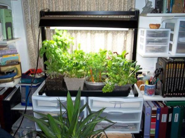 indoor vegetable garden ideas 1000+ ideas about Indoor Vegetable Gardening on Pinterest