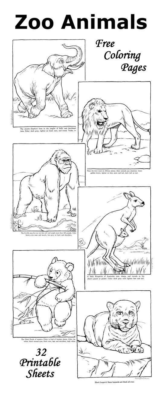 Zoo coloring pages - Fun facts with each zoo animal ... | free printable colouring pages zoo animals