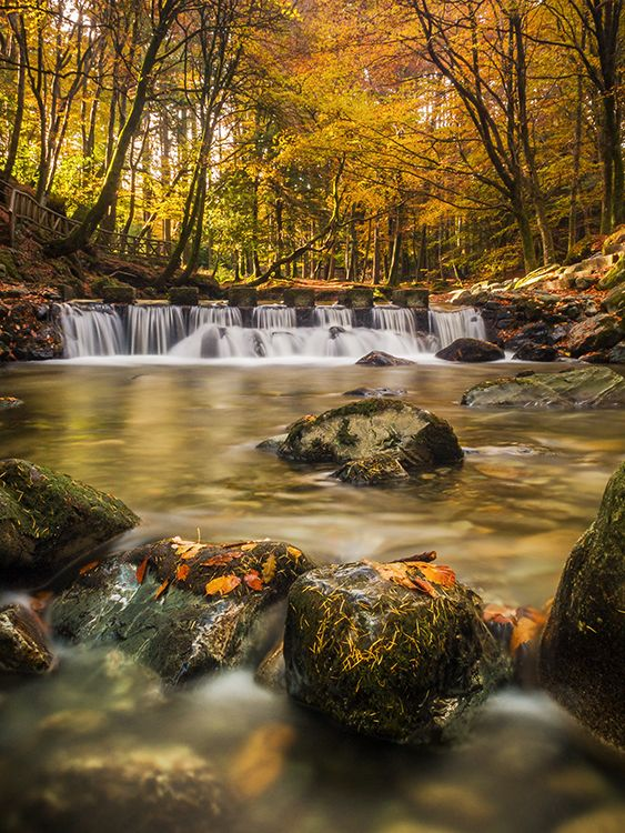 Early this morning the bright sunlight highlights the autumn colours at the stepping stones that cross the Shimna River in Tollymore Forest Park in County Down, Northern Ireland.: