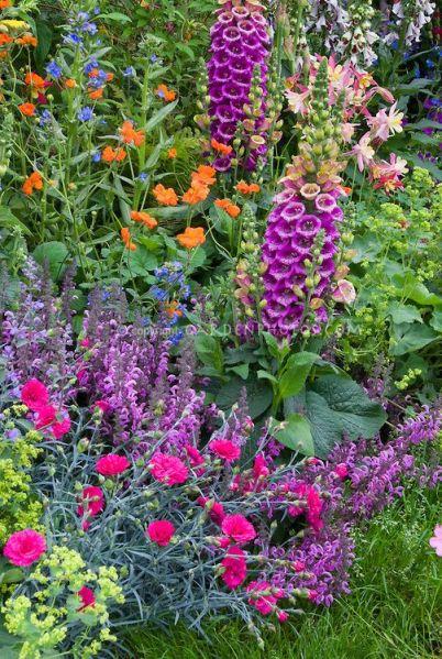 purple and orange flower garden 485 best images about garden inspiration on Pinterest