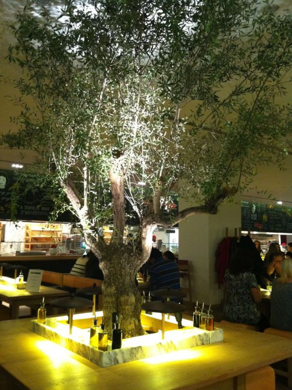 14 best images about Indoor Olive Tree on Pinterest
