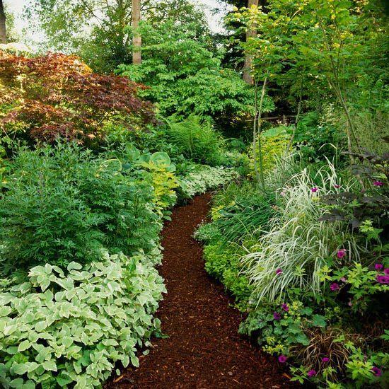 shade garden path ideas 13 best images about Gardening Bishop Weed & Hostas on
