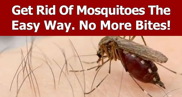 84 best images about get rid of bugs on Pinterest | Ants ...