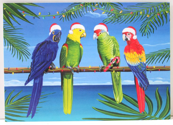 Christmas Parrots Holiday Cards With Warmest Wishes For A