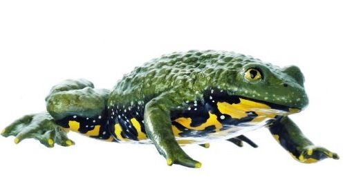 17 Best Images About SOMSO Zoology Models On Pinterest