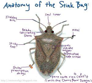 The anatomy of the stink bug #stinkbugs #pestcontrol #