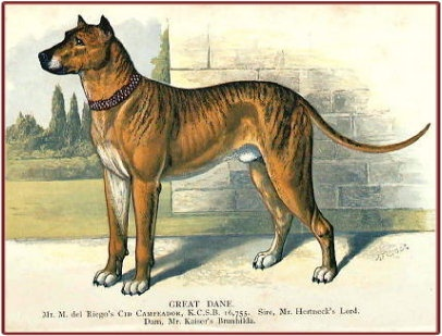 37 best images about Early Great Danes on Pinterest ...