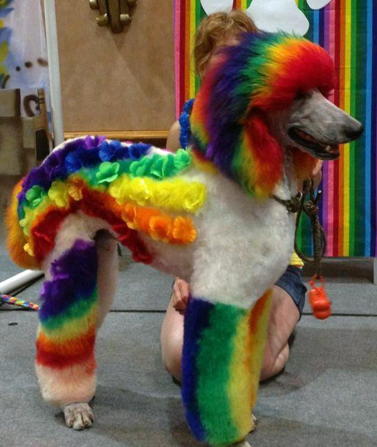 Rainbow BriteThe Most Colorful Girl In The World Has Got