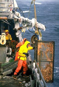 Image result for rock Lobster fisherman in danger