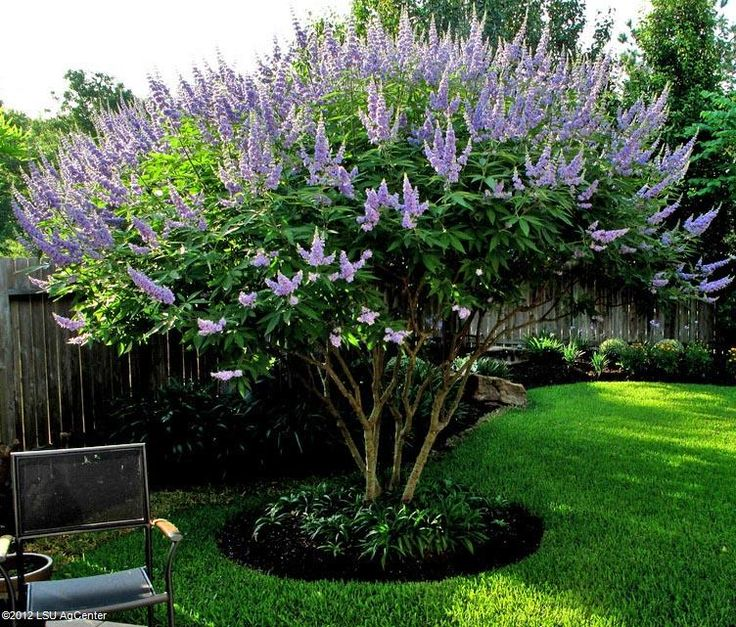 South Louisiana Landscaping Ideas