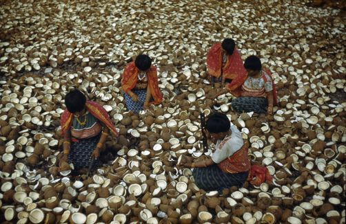 Image result for coconuts in the san blas