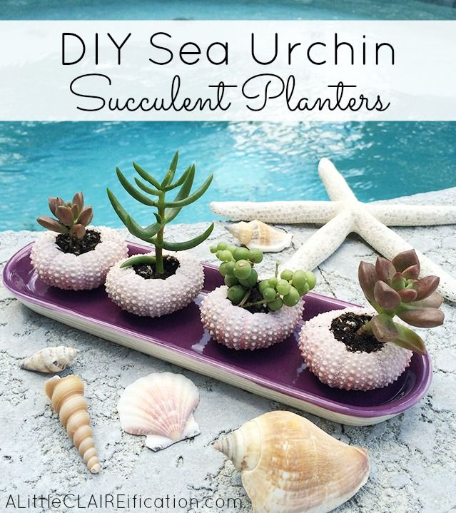DIY Sea Urchin Succulent Planters Bathrooms Decor
