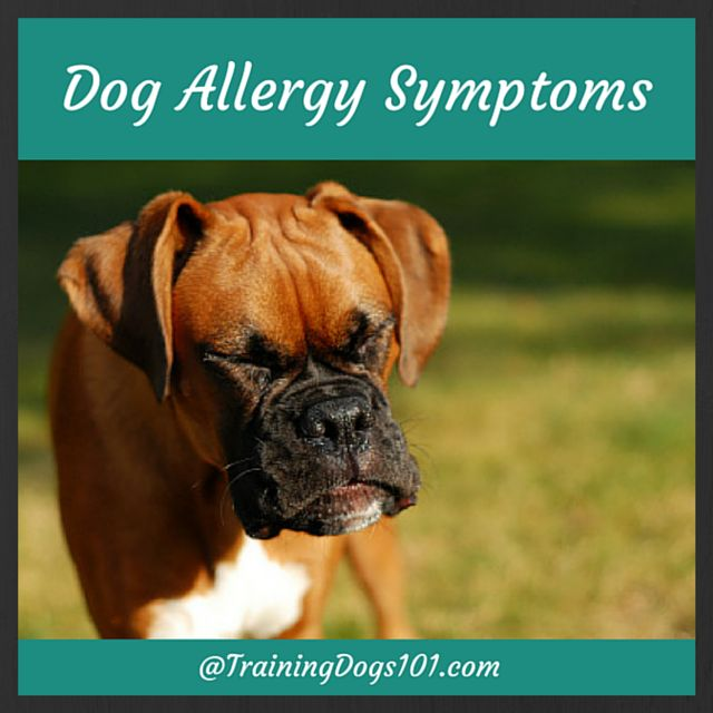 are allergic to cats 12 natural ways to defeat allergies in pictures ...