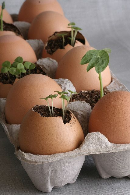 Start seedlings in an egg shell and, when ready, plant the entire thing. The egg
