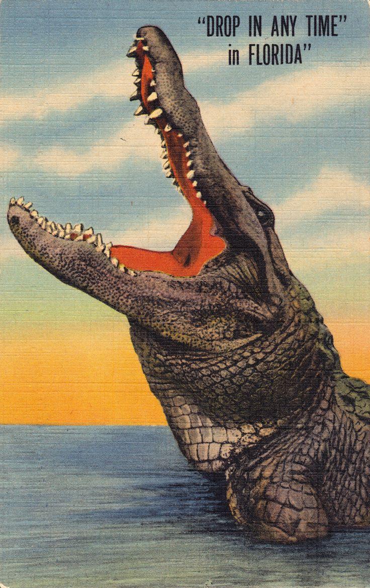 Vintage Florida Alligator Postcard I Love How They