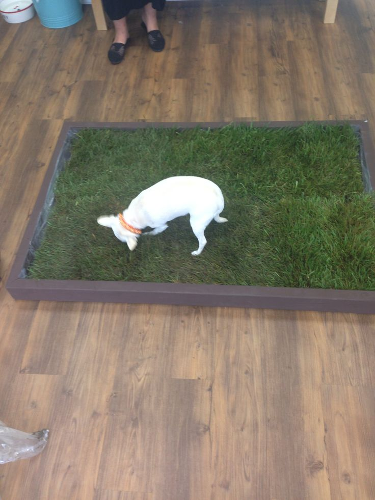 Pet Patio Potty Faq Doggy Solutions