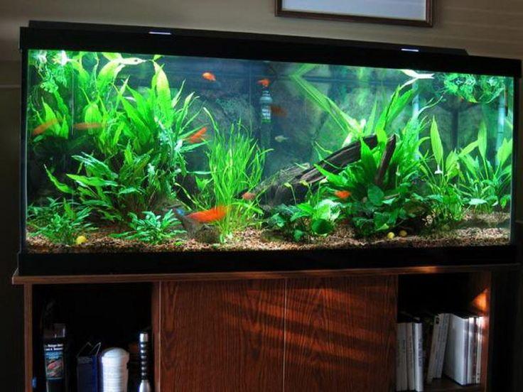 202 Best Aquarium Setups Images On Pinterest