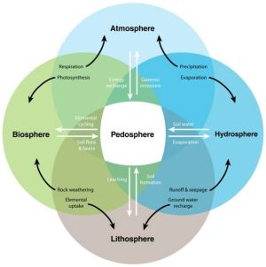 Interactive processes linking the pedosphere with the
