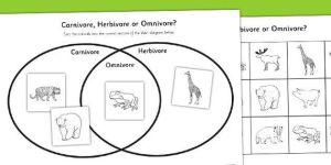 Omnivore, Carnivore or Herbivore Venn Diagram Sorting