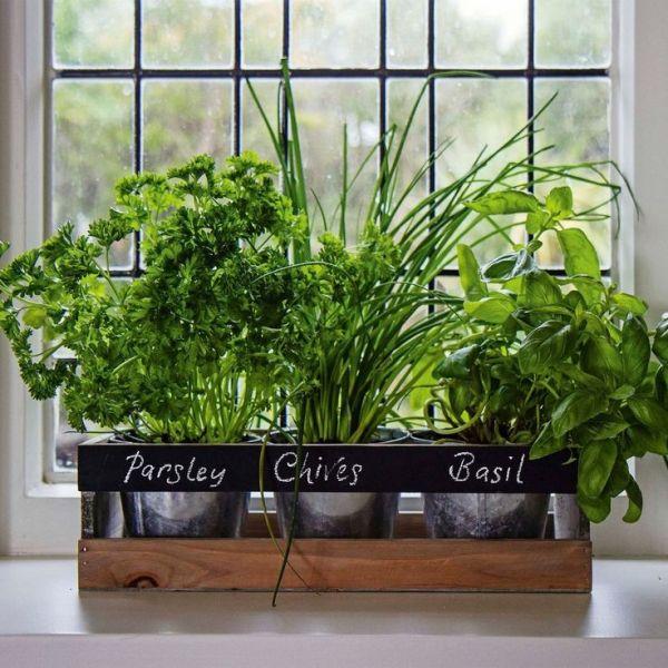 window indoor garden pods Garden Planter Box Wooden Indoor Herb Kit Kitchen Seeds