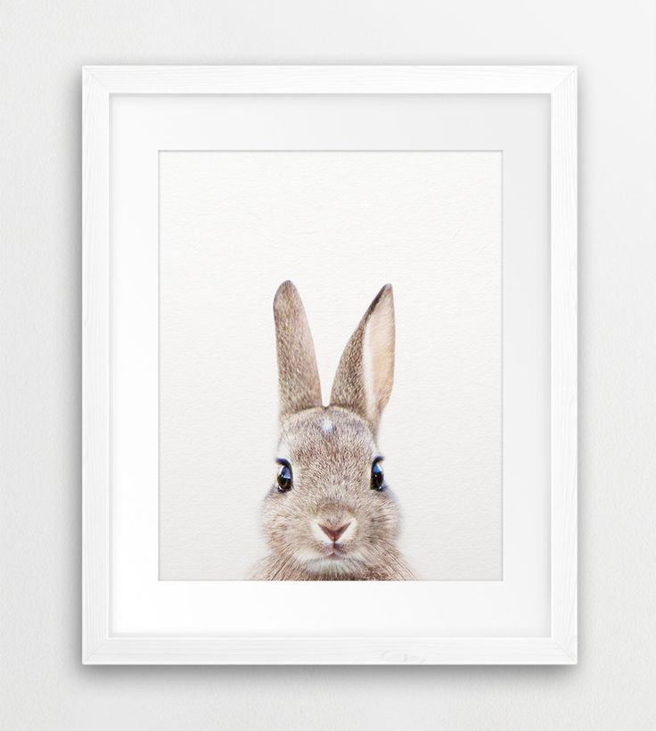 25 Best Ideas About Bunny Nursery On Pinterest Nursery