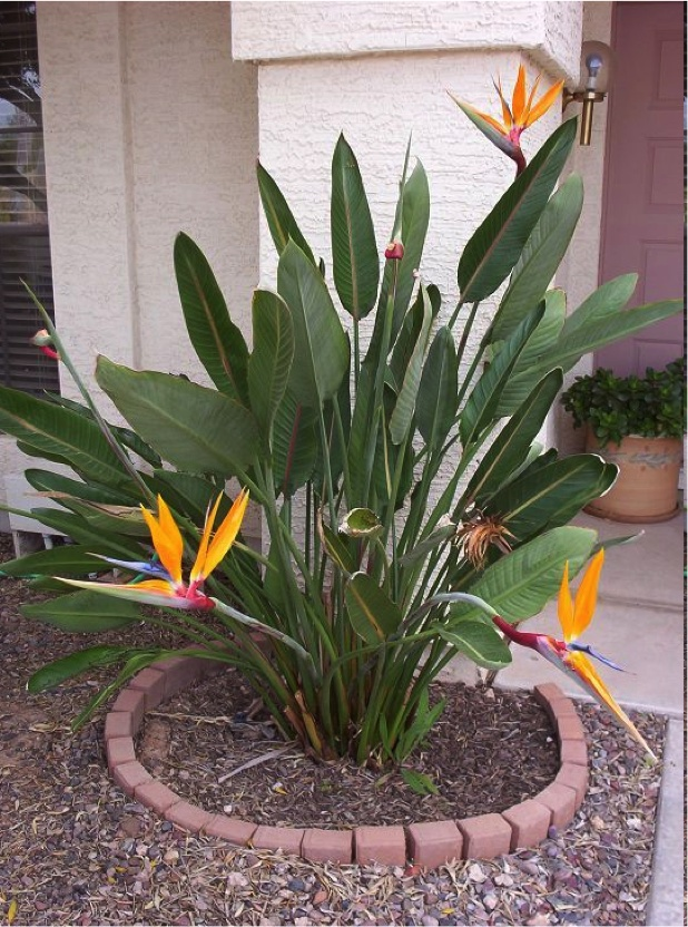 17 Best Images About FL Flowering Plants Other On
