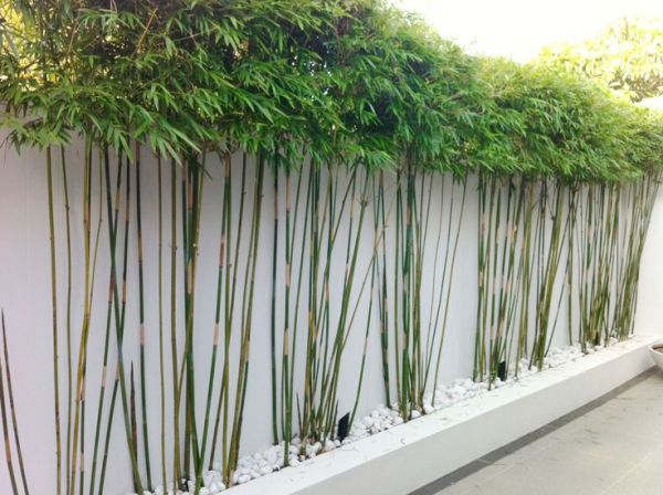 bamboo garden privacy screen 25+ best ideas about Bamboo garden on Pinterest | Bamboo