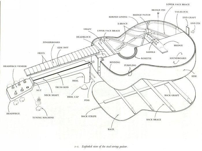 Diagram Acoustic Guitar Diagram Everything You Need To Know About