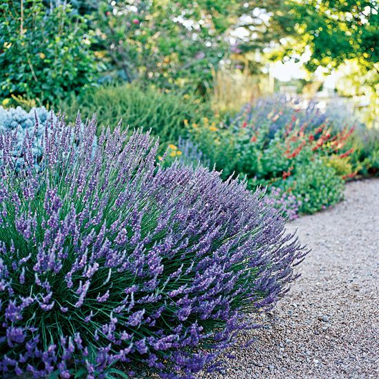 These tough plants and flowers will bloom and thrive in dry soil despite a lack of rain, keeping your landscape beautiful.