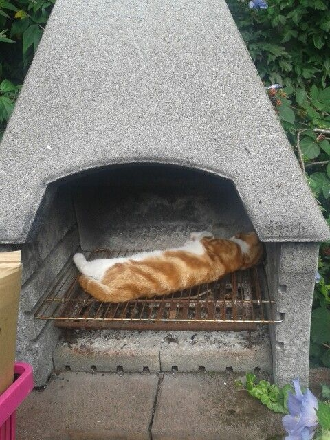 15 Best Images About Bbq Cats On Pinterest Cats