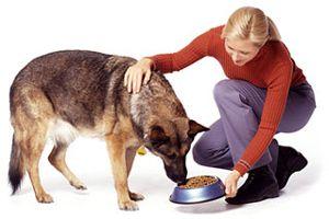 「dog feeding」の画像検索結果