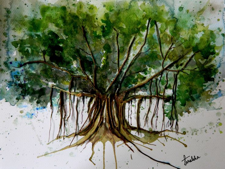 17 Best Images About Banyan Tree On Pinterest Trees
