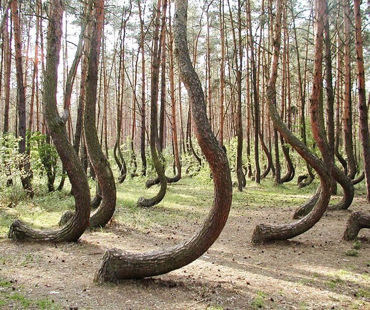 The Crooked Forest is locat