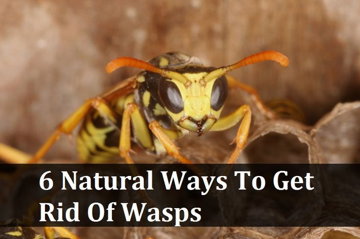how to get rid of honey bees nest