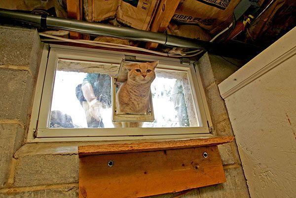 Homemade Cat Door Basement Sliding Window THEHOMEMiCasa Pinterest Home Design Cats