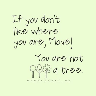 Not a tree….