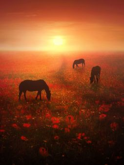 horses and nature