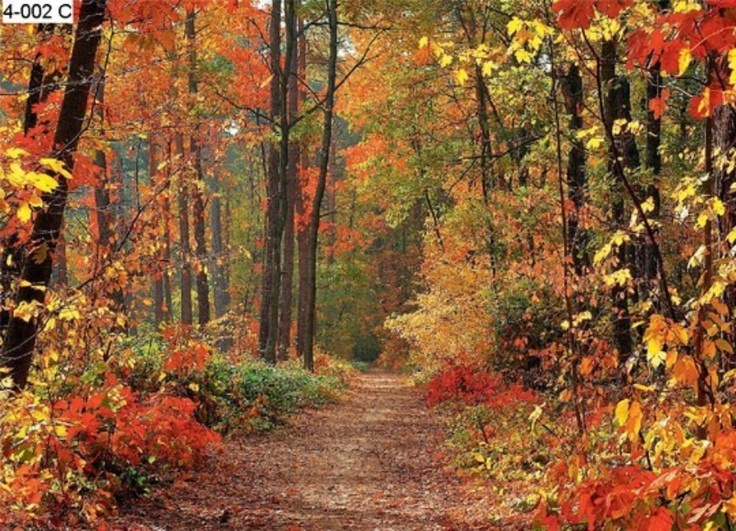 woodland wall murals autumn forest photo wall mural on wall murals id=92832