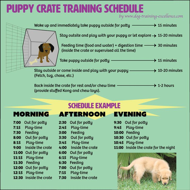Free printable puppy crate training schedule! The best solution to potty train your dog and prevent home destruction. Follow this